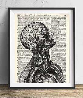 Human Anatomy Illustration (#1) Dictionary Art Print 8x10