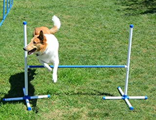 dog hurdle jump