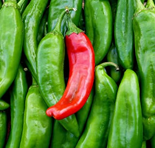 Sweet Yards Seed Co. Organic Hot Pepper Seeds 'New Mexico Big Jim' – Two Seed Packets! – Over 60 Open Pollinated Non-GMO Seeds – Huge Chiles!