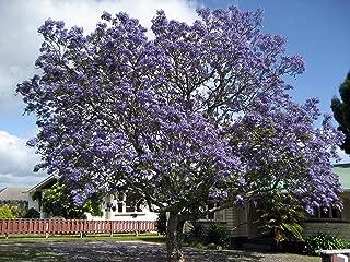 Beautiful Flowering 3-7