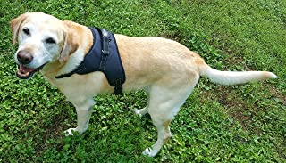 Best petsmart freedom harness Reviews