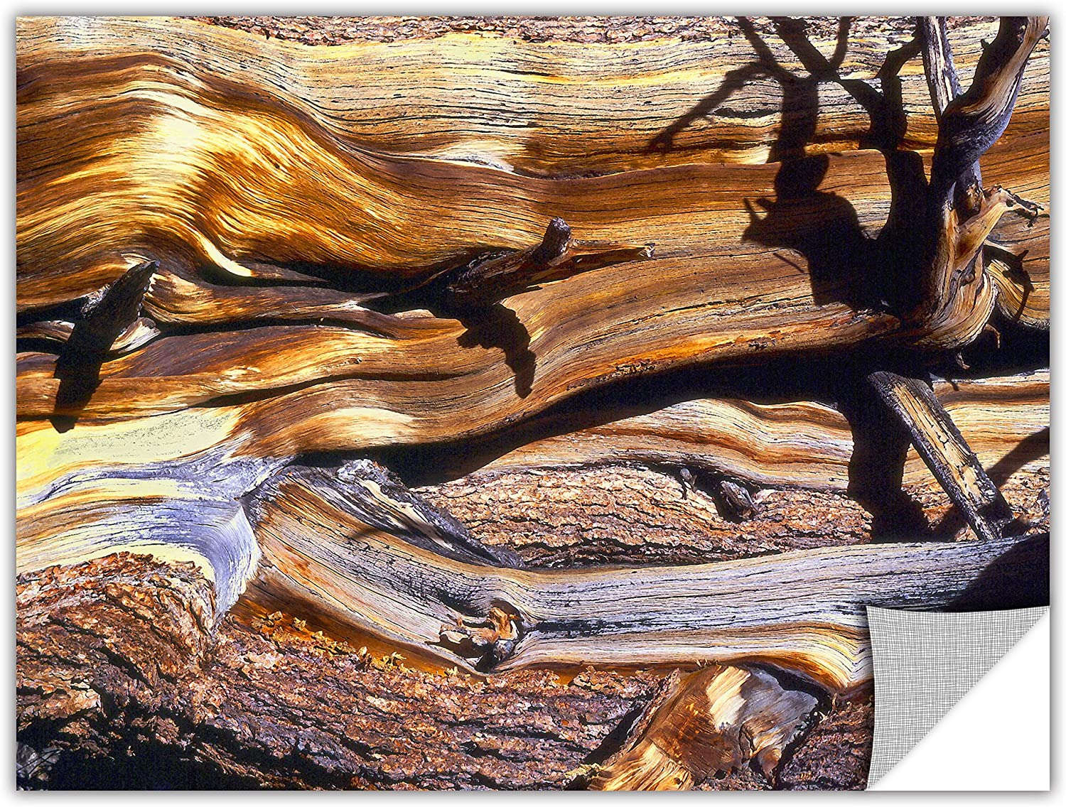 ArtWall Ancient Bristlecone Removable Wall Art by Dean Uhlinger, 18 by 24Inch