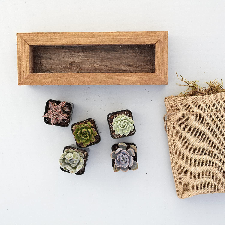 Succulent Outlet ☆ Store Free Shipping Gardens Medium Trough Planter DIY R Kit 10