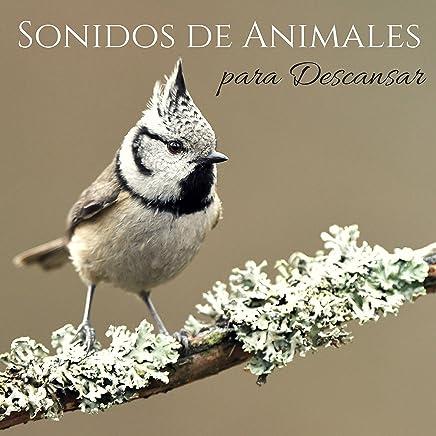 Sonidos de Animales para Descansar - Mente en Blanco para Pensar y Dormir Profundamente