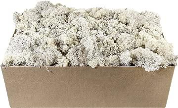 SuperMoss 759834232476 White Reindeer Moss