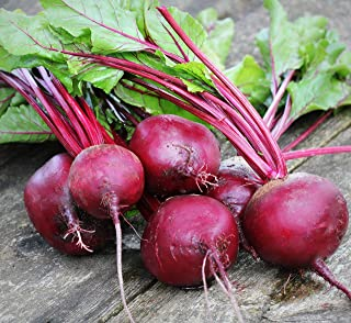 Sweet Yards Seed Co. Organic Beet Seeds 'Detroit Dark Red' – Over 125 Open Pollinated Heirloom Non-GMO Seeds