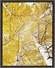 Kate and Laurel - Sylvie Golden Leaves on Birch Trees Color Photography Framed Canvas Digital Wall Art by Amy Peterson, Dark Gray 18 x 24