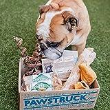 Pawstruck Natural Dog Chew Box: Medium Dogs (20-50 LBS)