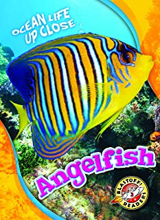 Angelfish (Ocean Life Up Close: Blastoff! Readers, Level 3)
