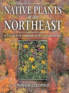 northeast native plants