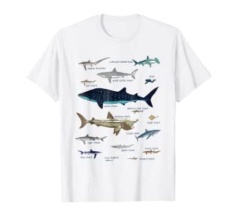 71111f60f92 Amazon.com: 15 Sharks of the World with Labels Science Biology T ...
