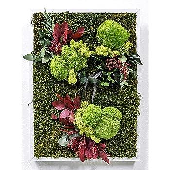 Mi Jardín Vertical Musgo Preservado Cuadro Vegetal 50 x 70 cm (Montmartre): Amazon.es: Hogar