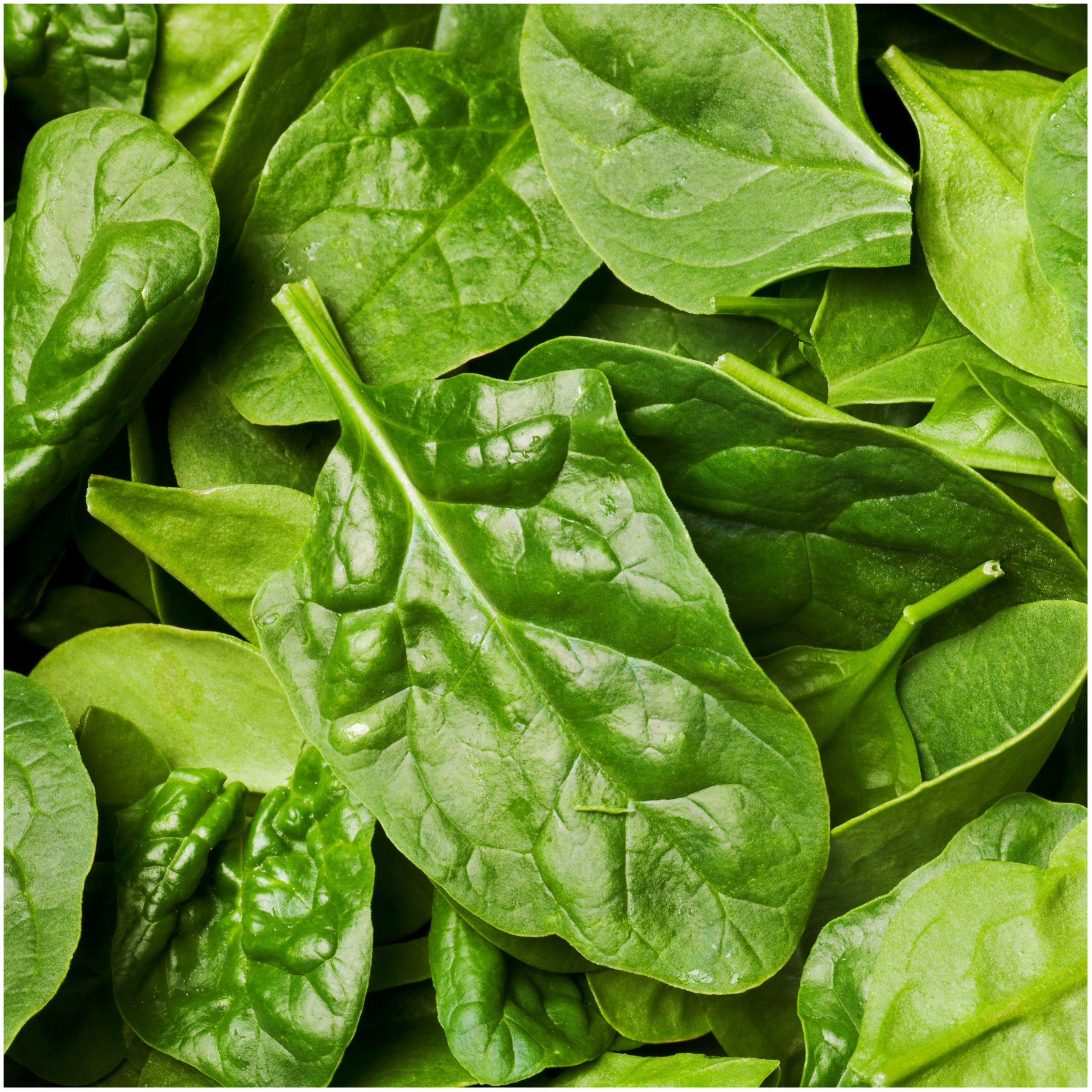 Original Package 100 Spinach Seeds Spinacia Oleracea Spinage Vegetable C048