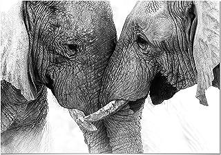 Panorama Poster Pareja Elefantes 70x50cm - Impreso en Papel