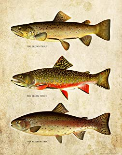 Apple Creek Brown Brook Rainbow Trout Unlimited Art Print 11x14 Vintage Fly Fishing Lures Wall Decor Pictures