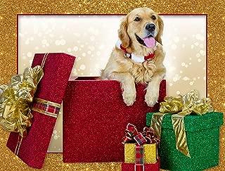 Christmas Surprise Golden Retriever Christmas Cards