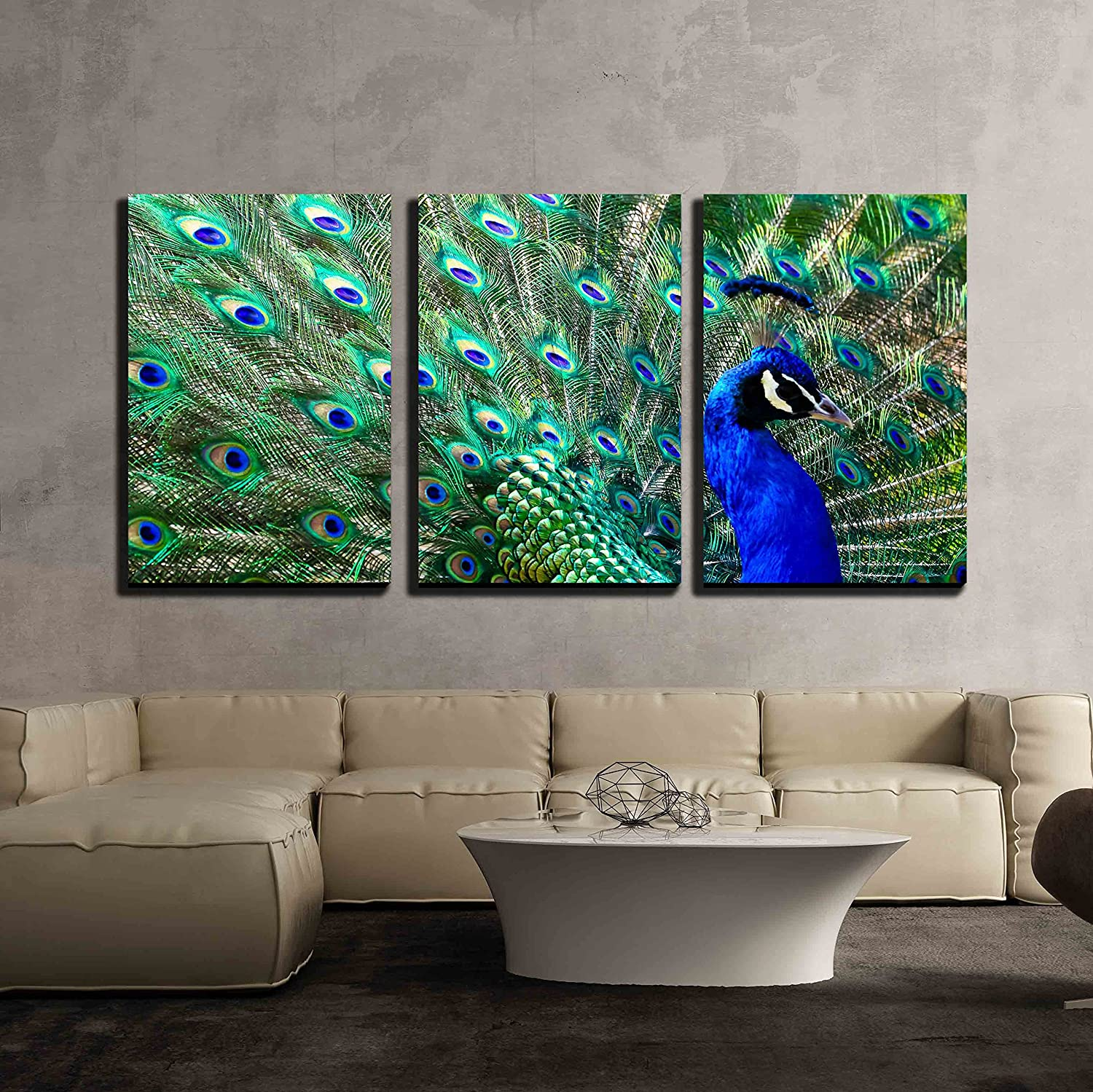 Wall26 - 3 Piece Canvas Wall Art - Male Peacock Displaying His colorful Feathers - Modern Home Decor Stretched and Framed Ready to Hang - 16 x24 x3 Panels