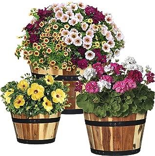 Best international 800 planter Reviews