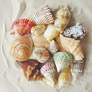 Tumbler Home Polished Sea Shells with Bag of White Sand   Mixed Color and Size Shell and 2 Pounds of White Sand   Beach Decor - Wedding