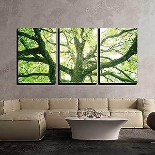 Best fresh tree art Reviews