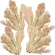 Best coral hand fans Reviews