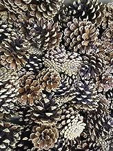 Bulk Pine Cones, Small-Medium, 100-pack