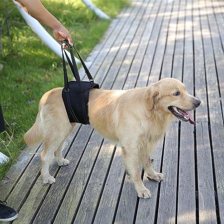 Rainbowsun Hunde Tragehilfe Hundegeschirr Für Probleme An Der Wirbelsäule Der Hüfte Und Den Knien Ihres Hundes Einstellbar Dauerhaft Wasserdicht Aus Hochwertigem Material Neoprene Schwarz Haustier