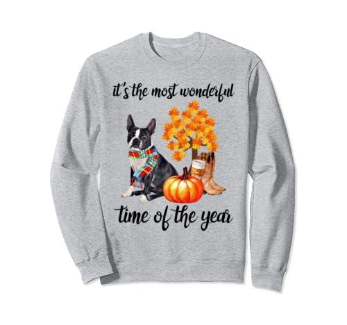 Halloween It's The Most Wonderful Time Of The Year Boston Sweatshirt