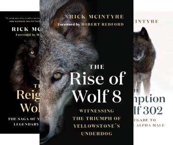 The Alpha Wolves of Yellowstone