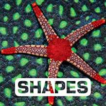Shapes (Picture This) (English Edition)