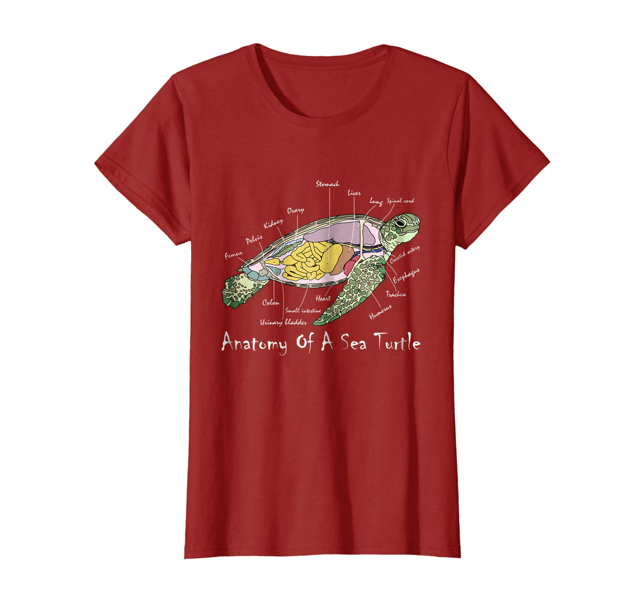 Amazon.com: Funny Anatomy Of A Sea Turtle Cute Animal Lover Gift T ...