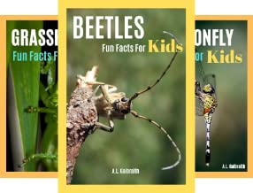 Bug World (3 Book Series)