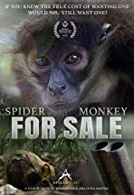 Spider Monkey for Sale