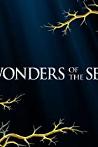 Wonders of the Sea 3D Poster