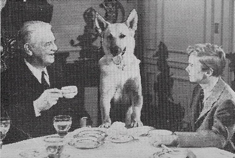 Ted Donaldson, Thurston Hall, and Flame in Rusty Saves a Life (1949)