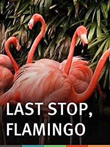 Sites in downloading movies Last Stop, Flamingo by [2K]