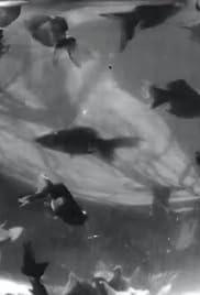 Bocal aux poissons-rouges Poster