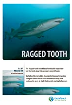 Ragged Tooth