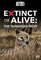 Extinct or Alive: Tasmanian Tiger