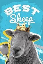 Best Sheep