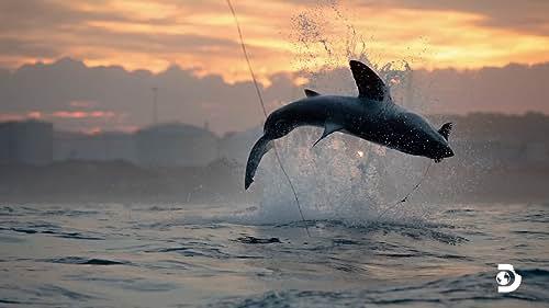 Shark Week: Air Jaws Strikes Back