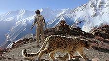 Andy e il leopardo delle nevi