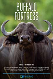 Blood Rivals Lion vs Buffalo: Buffalo Fortress (2014)