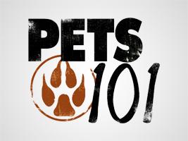 Where to stream Pets 101