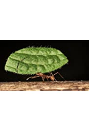Five things ants can teach us about management