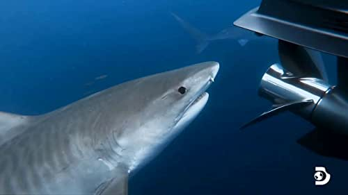 Shark Week: The Sharks Of Headstone Hell