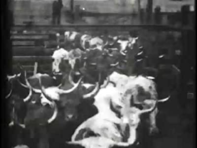 Watch hq online movies Cattle Driven to Slaughter [1920x1280]