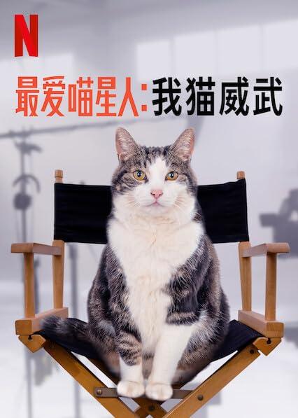 最愛喵星人:我貓威武 | awwrated | 你的 Netflix 避雷好幫手!