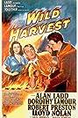 Wild Harvest (1947) Poster