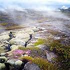 Magisches Island - Leben auf der größten Vulkaninsel der Welt (2019)